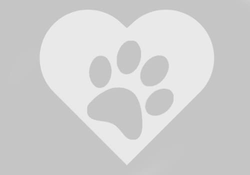Gergely- petsitter Budapest or Pet Nanny for Dogs