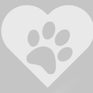 One visit cats in Budapest pet sitting request