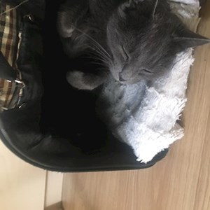 Boarding cat in Budapest pet sitting request